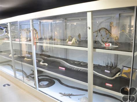 Museum of Anatomy & Pathology 2020, #1 top things to do in