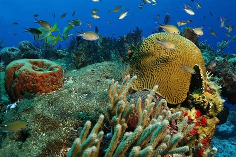 School Of Small Fish Over Coral Reef - Cozumel Stock Photo