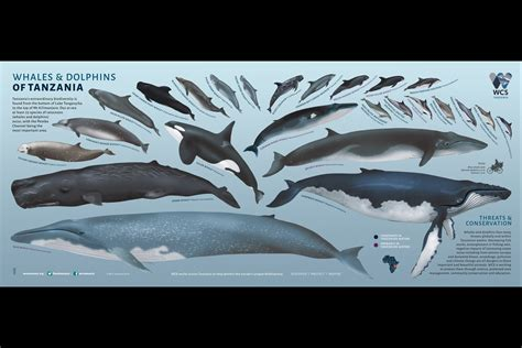 Whales and Dolphins of Tanzania | Wild View